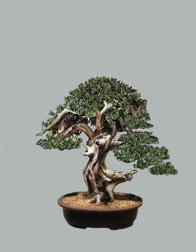 Ashe Juniper (Vito Megna tree) design help needed Vito_t10