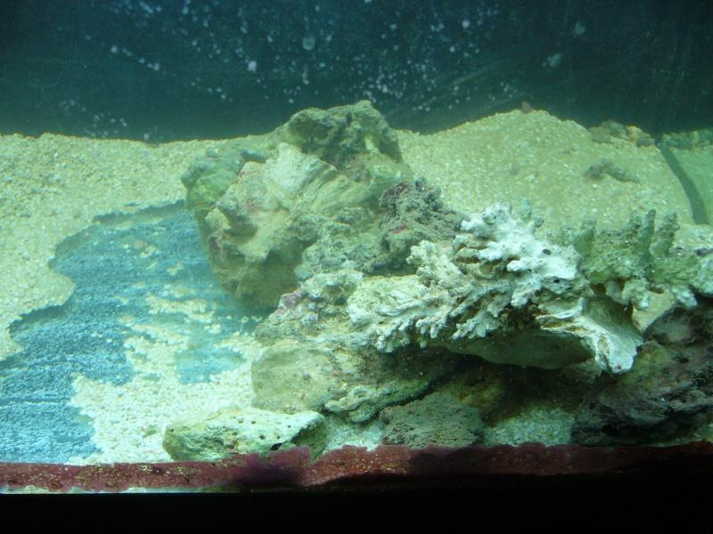 mon red sea max 130 P1000315