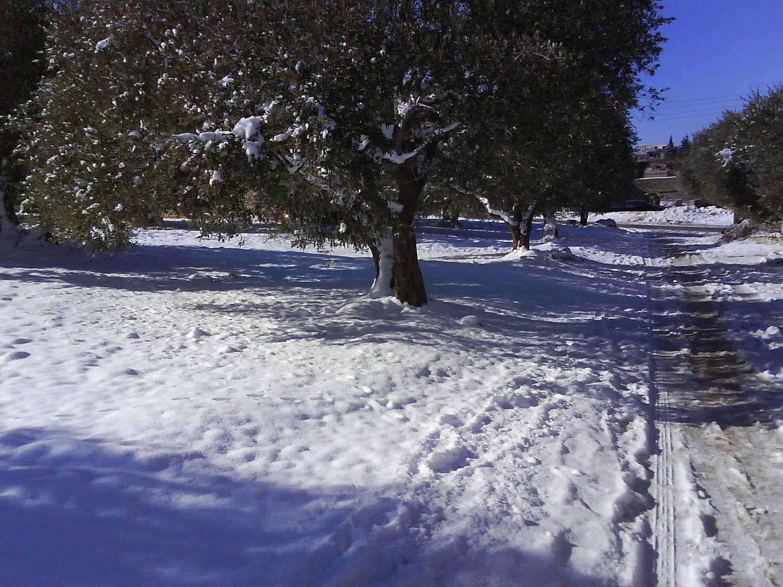 حاس الخضراء والثلوج الجزء الثاني 1310