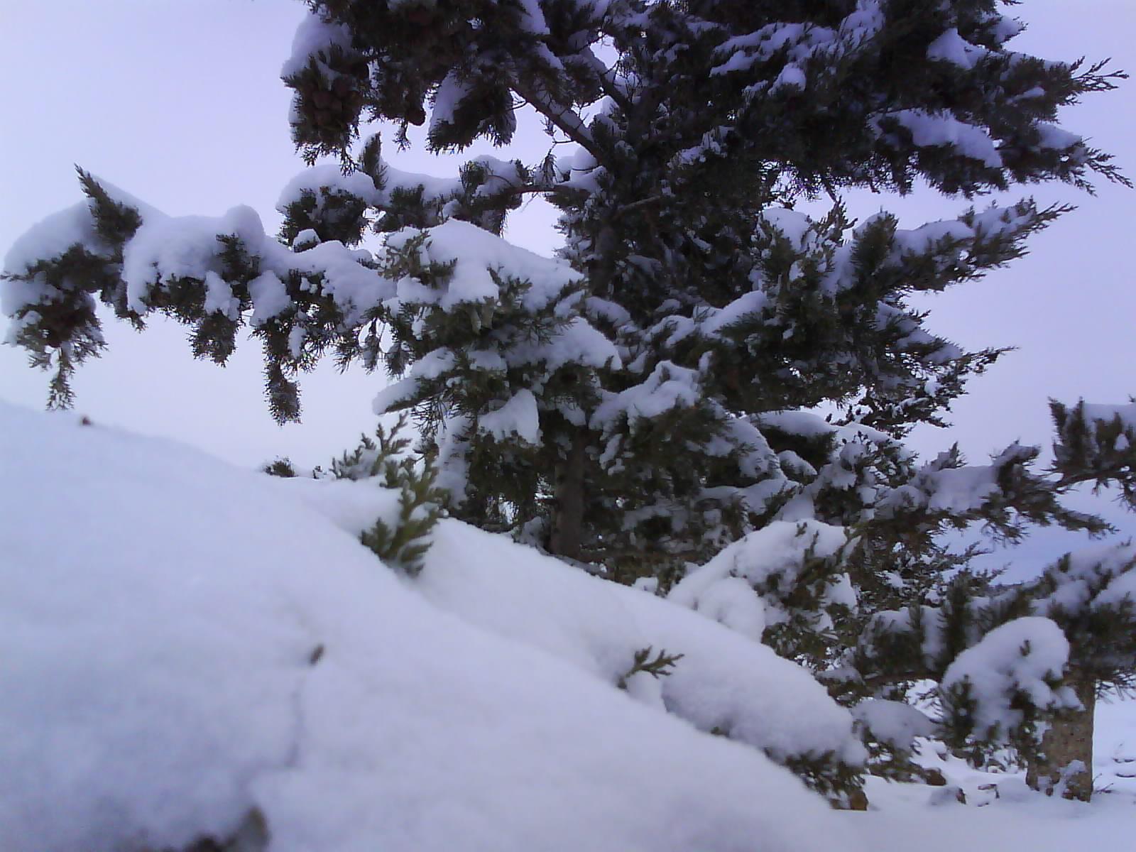 حاس الخضراء والثلوج الجزء الثاني 1610