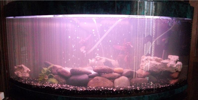 debutant 140l quel poisson cichlid malawi choisir. Black Bedroom Furniture Sets. Home Design Ideas