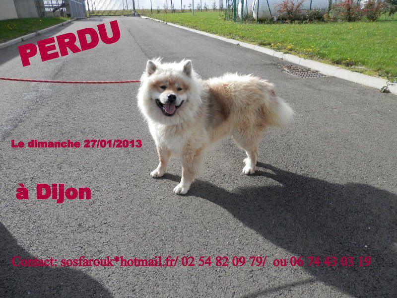 Farouk type Eurasier perdu Dijon!!! 71823_10