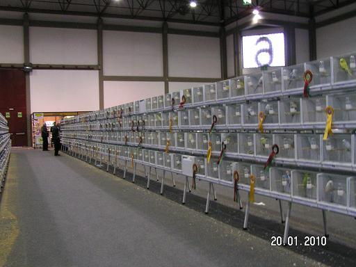 Suite des photos du mondial le 21-01-2010 N°2 Pict0025