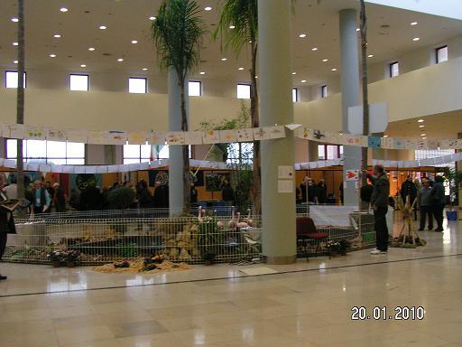 Suite des photos du mondial le 21-01-2010 N°2 Pict0026