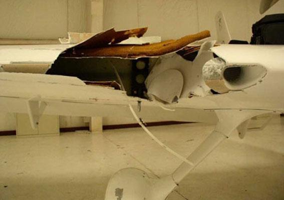 بالصوووور ... الطيور اخطر من القنابل على الطائرات 306410
