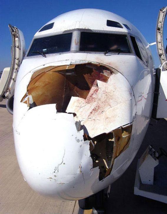 بالصوووور ... الطيور اخطر من القنابل على الطائرات 754110