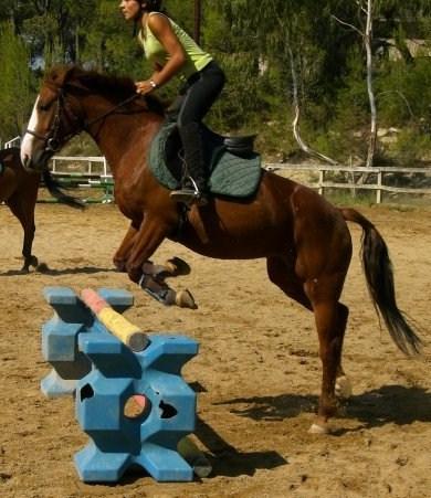 Photos =) chevaux etc... Moi_a_12