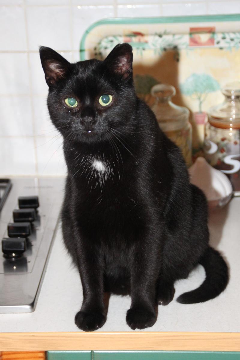 ARTHUR, jeune chat noir né en oct. 2010 Img_2510
