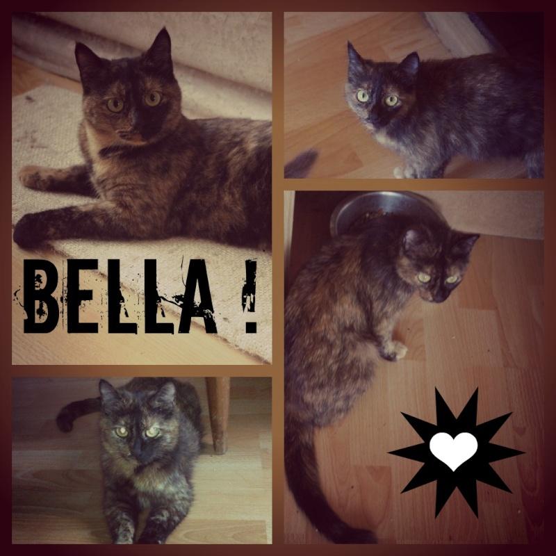 [ADOPTION] Bella, minette écaille de tortue - BEUVRAGES 2_bell10