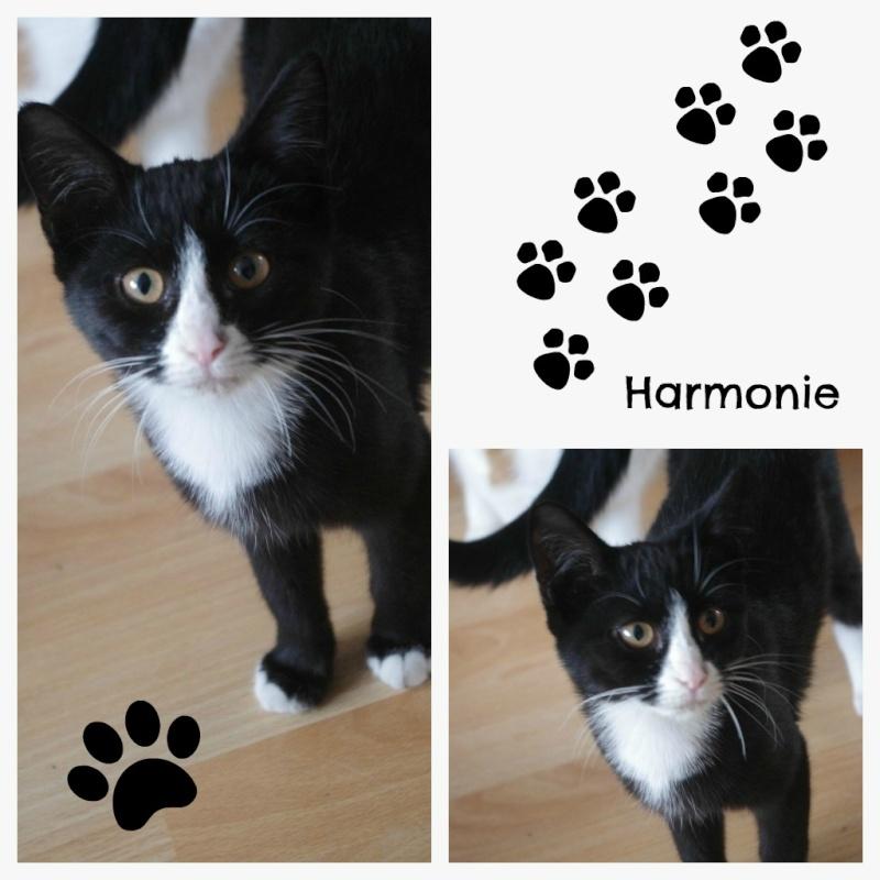 [SAUVETAGE] Harmonie - joli chaton biberon noir et blanc - BEUVRAGES 2_harm10