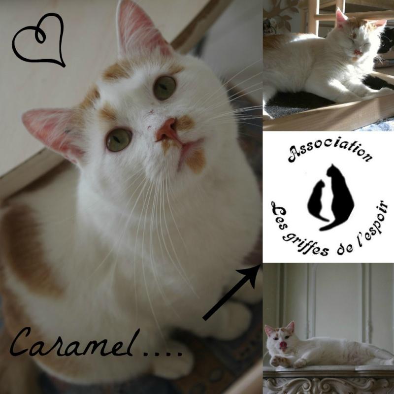 [ADOPTION] Caramel , chat roux et blanc, beau et câlin - SAINT AMAND LES EAUX 2caram11