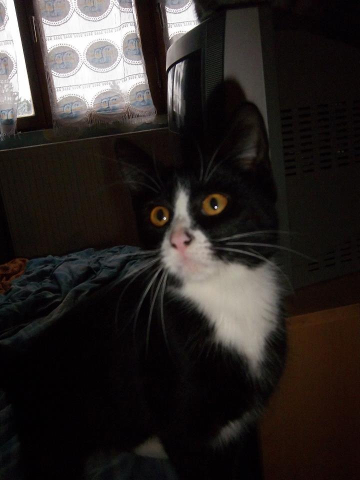 [SAUVETAGE] Harmonie - joli chaton biberon noir et blanc - BEUVRAGES Harmon10