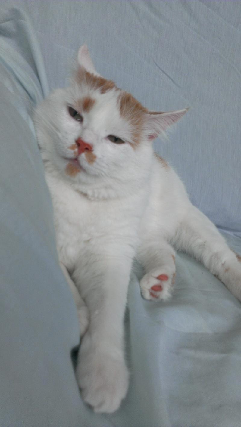 [ADOPTION] Caramel , chat roux et blanc, beau et câlin - SAINT AMAND LES EAUX Imag1910