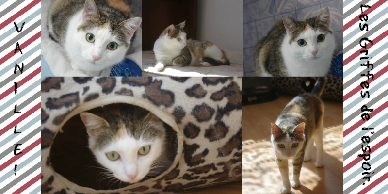 [ADOPTION] Vanille - très belle tricolore - BEUVRAGES Vanill10
