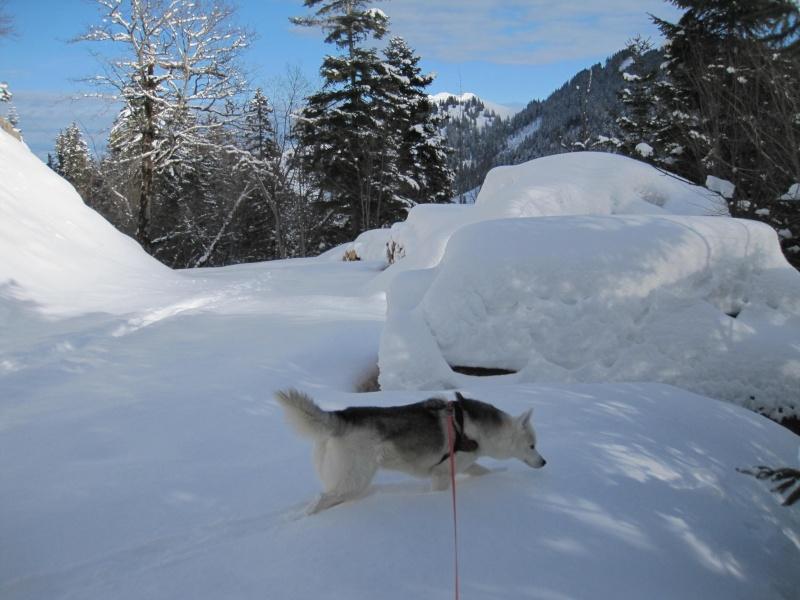 Nouvelles courses de Saskia dans la neige - Page 2 1013