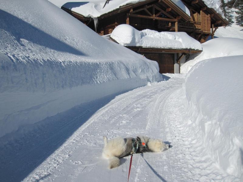 Nouvelles courses de Saskia dans la neige - Page 2 111