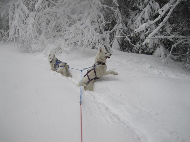 Ski-joering avec deux huskies 1117