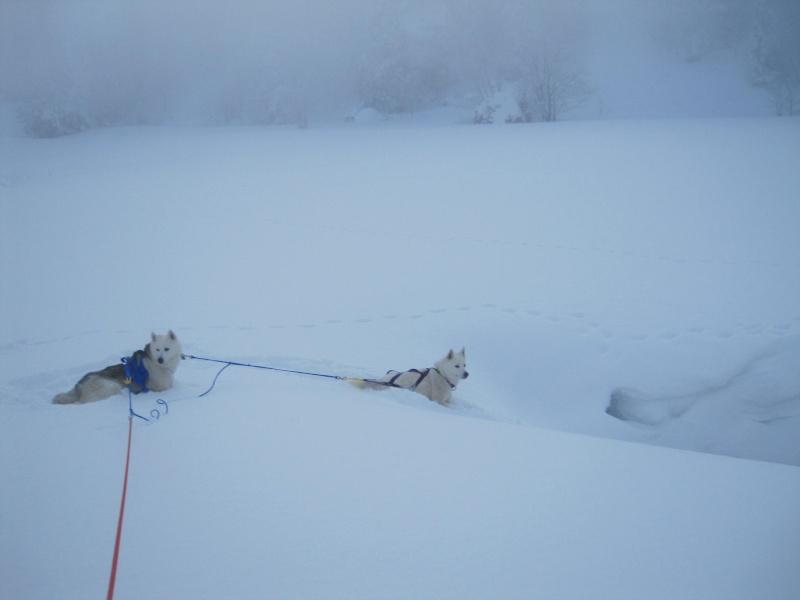 Ski-joering avec deux huskies 1118