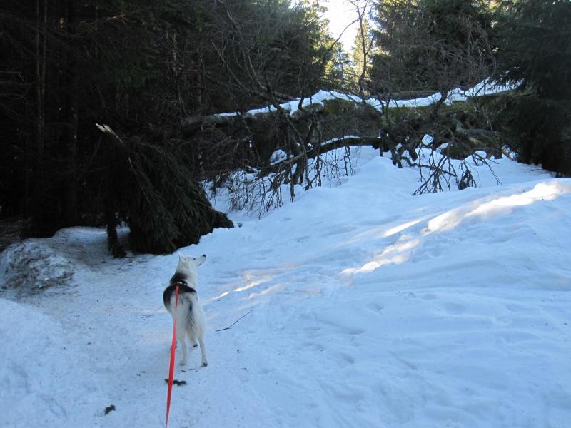 Nouvelles courses de Saskia dans la neige - Page 2 113