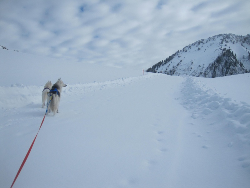 Ski-joering avec deux huskies 117