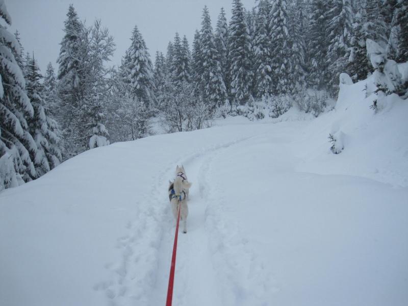 Ski-joering avec deux huskies 118