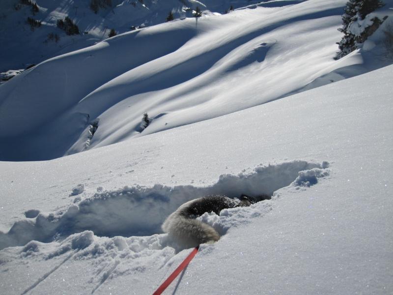 Nouvelles courses de Saskia dans la neige - Page 2 1211