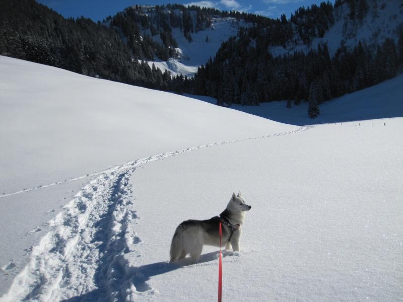 Nouvelles courses de Saskia dans la neige - Page 2 1212