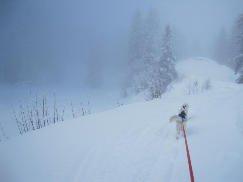 Ski-joering avec deux huskies 1215