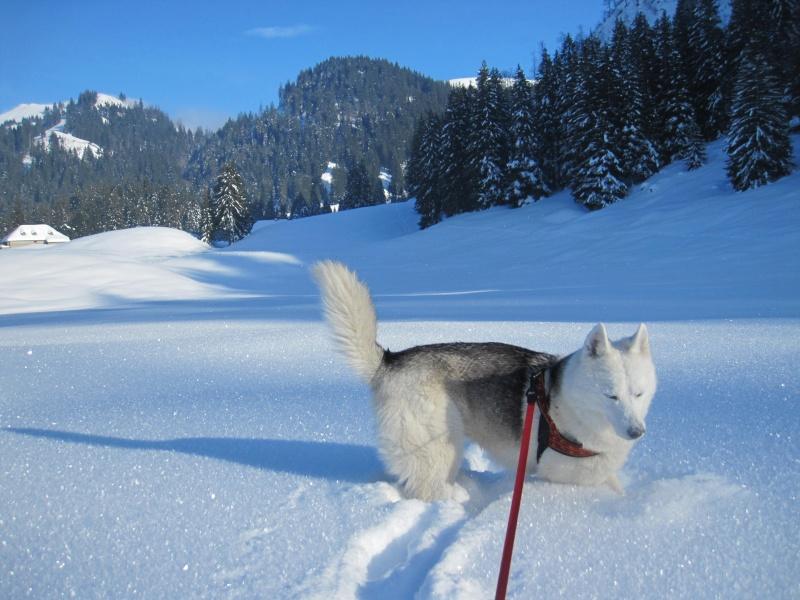 Nouvelles courses de Saskia dans la neige - Page 2 122