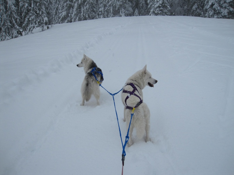 Ski-joering avec deux huskies 1312
