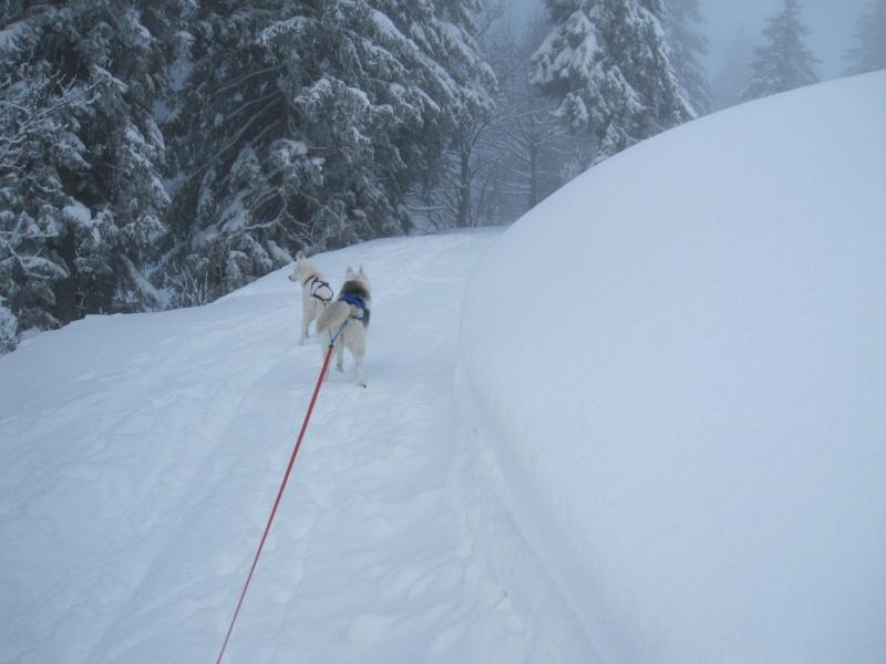 Ski-joering avec deux huskies 1313