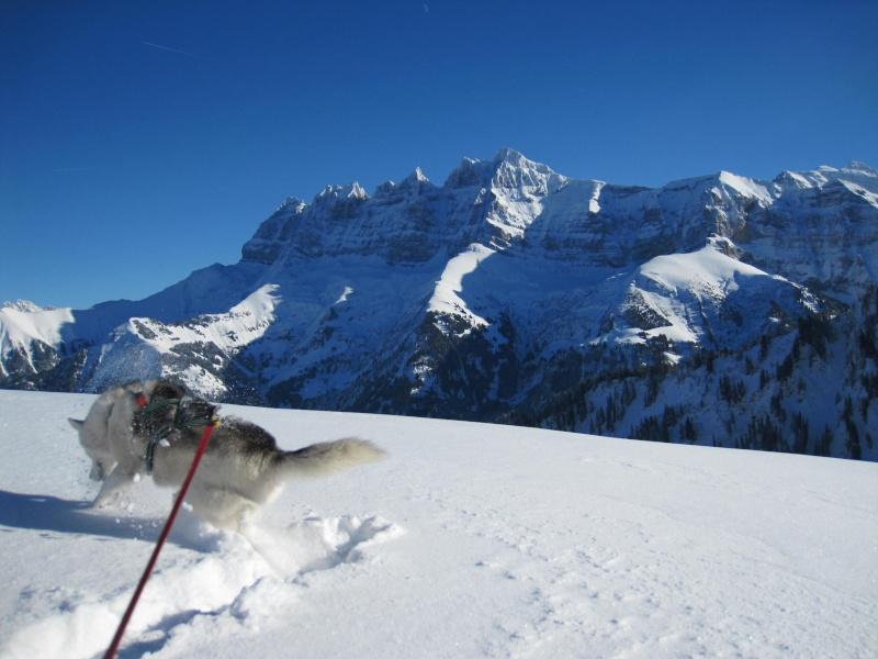 Nouvelles courses de Saskia dans la neige - Page 2 1411