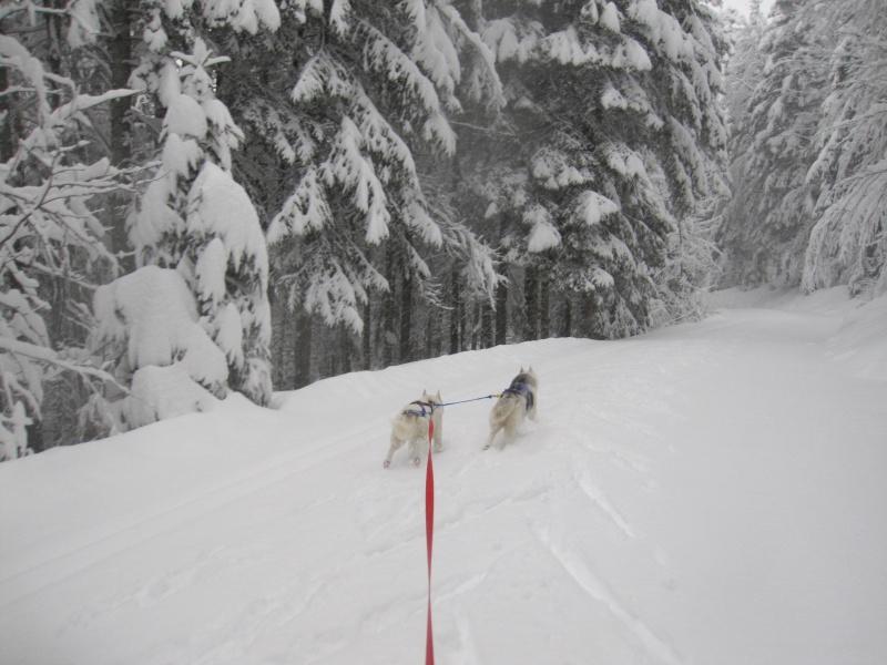 Ski-joering avec deux huskies 1413