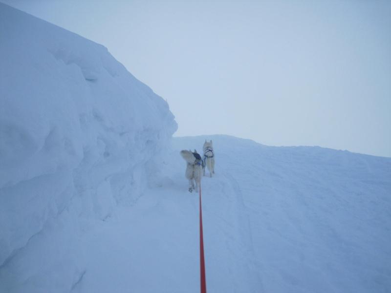 Ski-joering avec deux huskies 1414