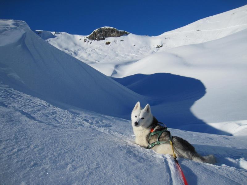 Nouvelles courses de Saskia dans la neige - Page 2 1511