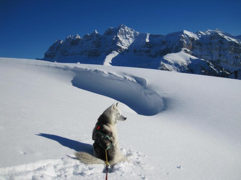 Nouvelles courses de Saskia dans la neige - Page 2 1611