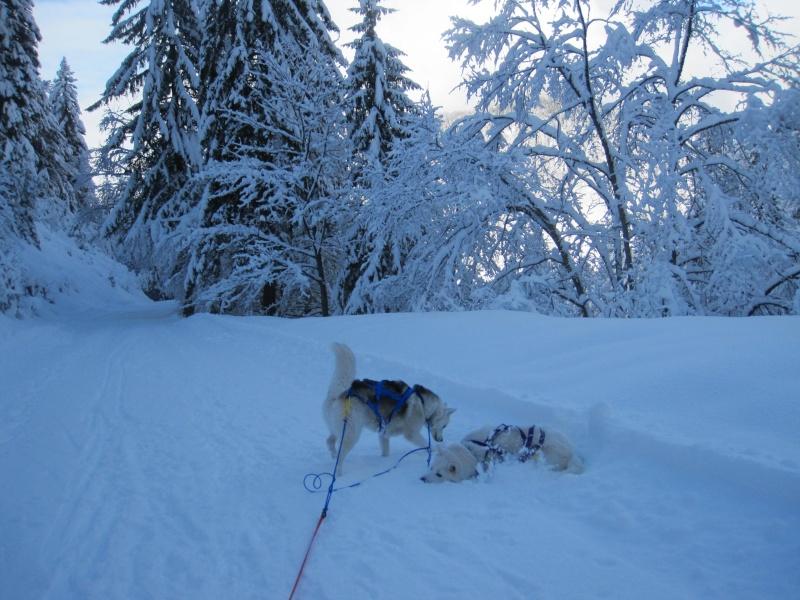 Ski-joering avec deux huskies 1613