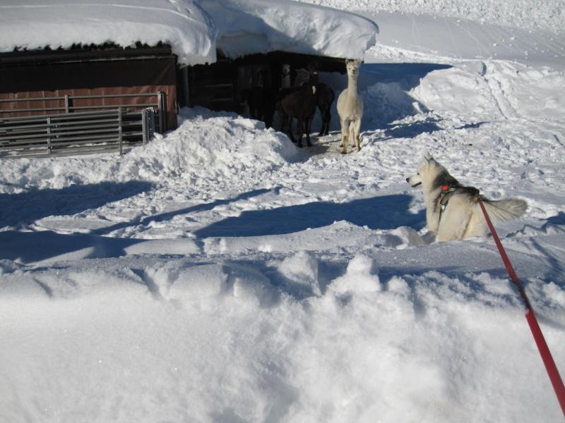 Nouvelles courses de Saskia dans la neige - Page 2 1711