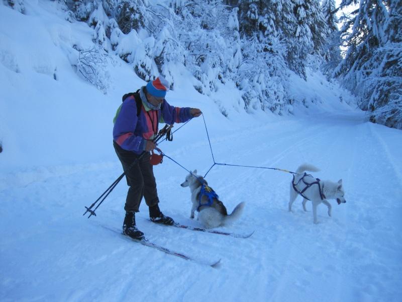 Ski-joering avec deux huskies 1713