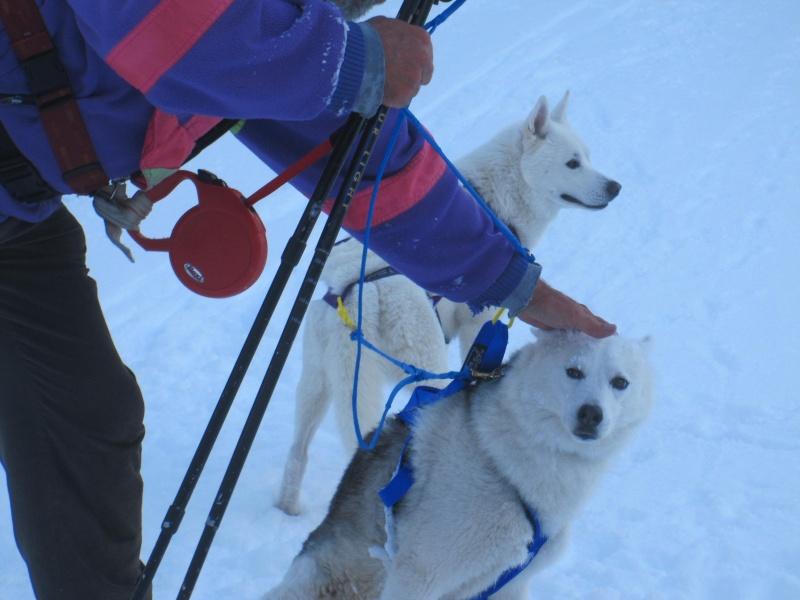 Ski-joering avec deux huskies 1813