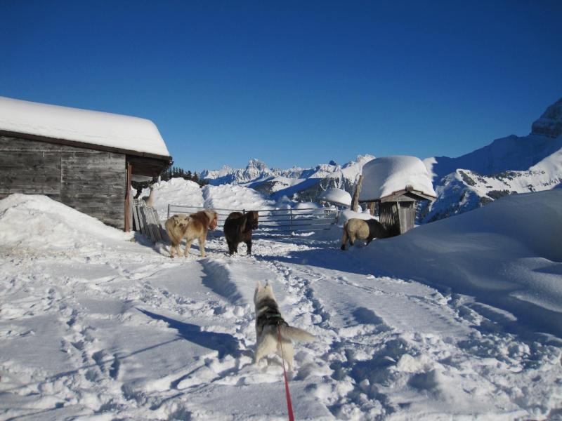 Nouvelles courses de Saskia dans la neige - Page 2 2012