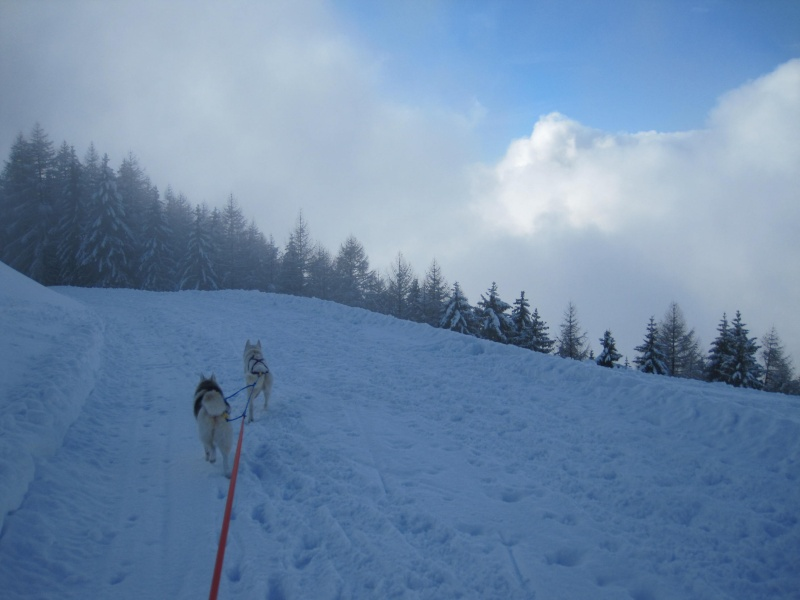 Ski-joering avec deux huskies 2014