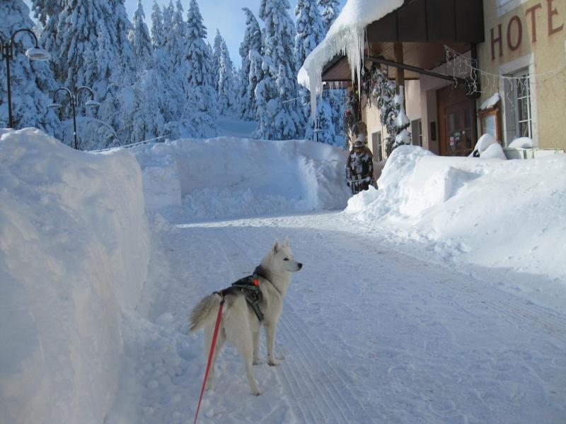 Nouvelles courses de Saskia dans la neige 210