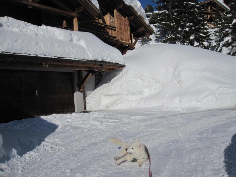 Nouvelles courses de Saskia dans la neige - Page 2 211