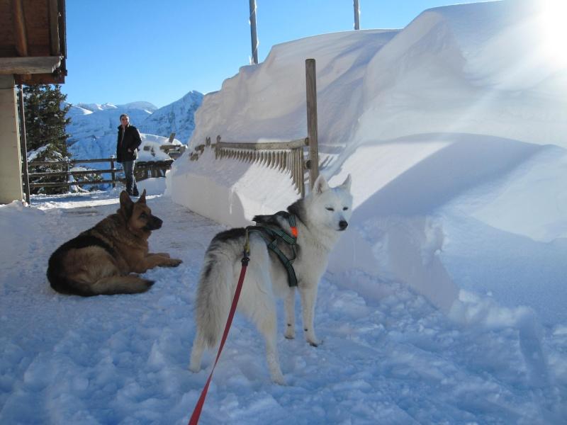 Nouvelles courses de Saskia dans la neige - Page 2 2112