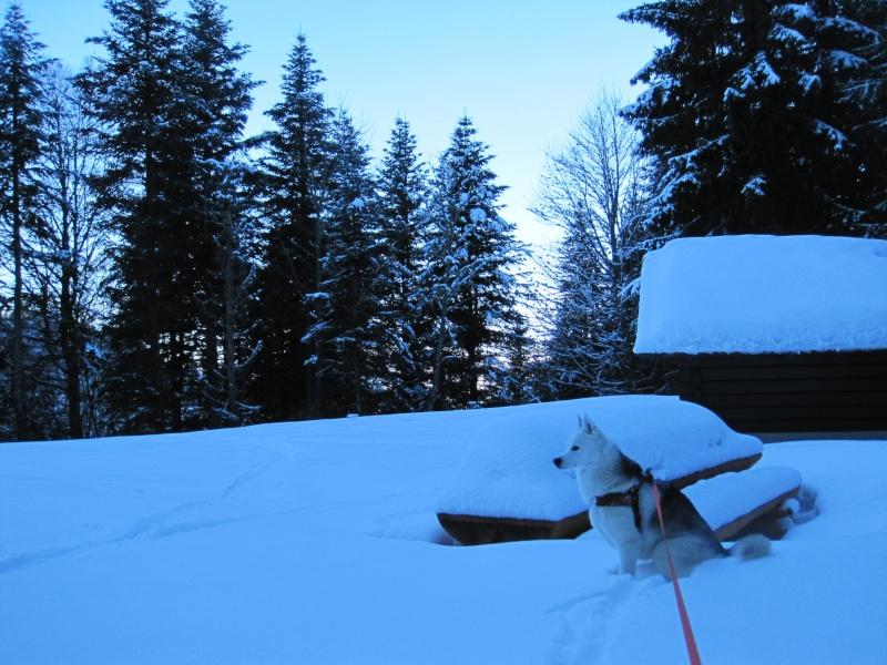 Nouvelles courses de Saskia dans la neige - Page 2 212