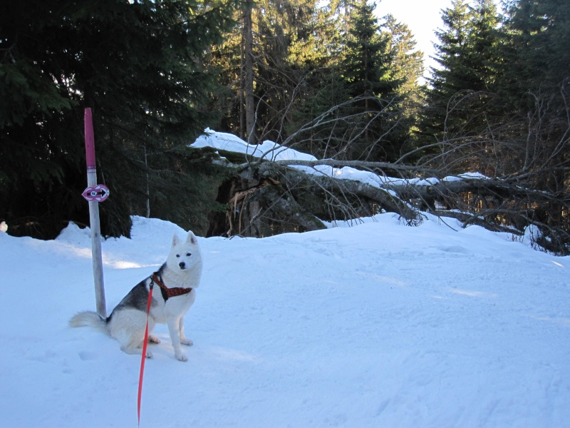 Nouvelles courses de Saskia dans la neige - Page 2 213