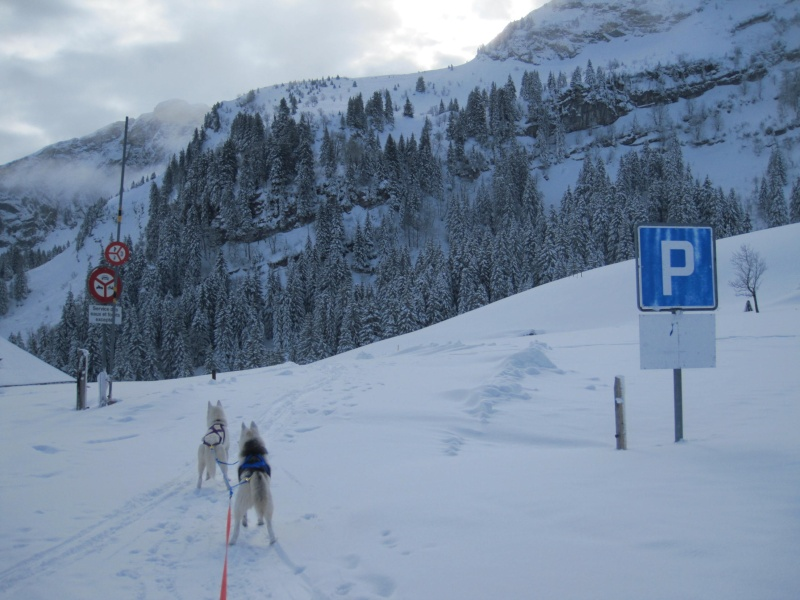 Ski-joering avec deux huskies 217
