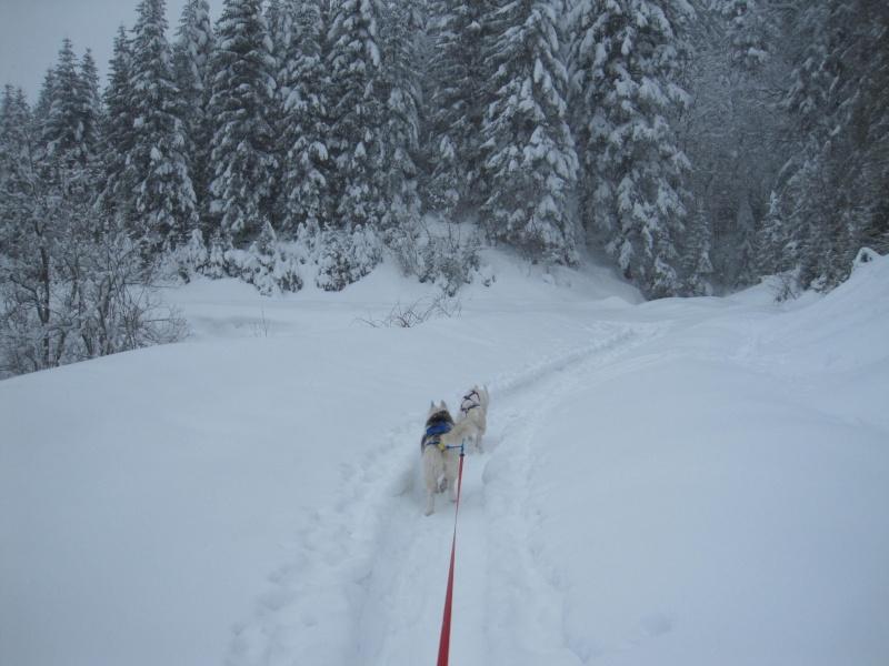 Ski-joering avec deux huskies 218