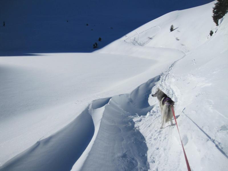 Nouvelles courses de Saskia dans la neige - Page 2 221